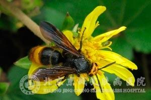 被蜂螫伤该怎么办